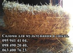 Straw for mulching plants in the square bales
