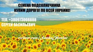 sunflower seeds of Semyon sonyashnik